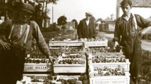 Voor de tuinders is het belangrijk dat de producten ook op zaterdag worden geoogst en naar de veiling gaan