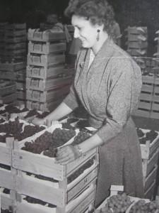 Anneke Elro maakt zich vertrouwd met het Westlandse product.